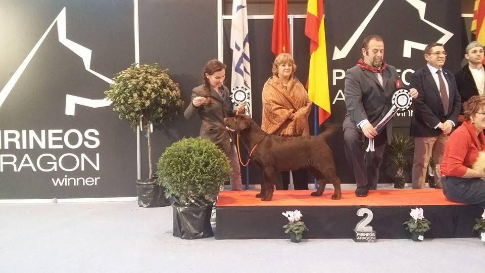 Amador Reserva Best in Show Puppy