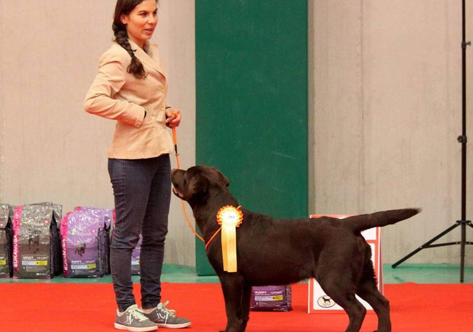Amador  en la MONOGRÁFICA Mejor Cachorro y Trofeo Carpenny
