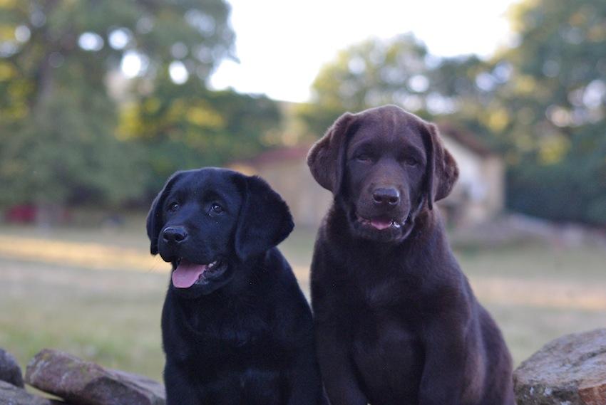 Cachorros disponibles